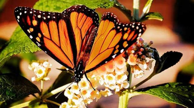 butterflyFest.jpg