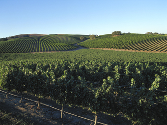 SB Vintners Festival Vineyard Hike with Wine @ Beckmen Vineyards' Purisima Mountain Vineyards 1:00pm - 3:00pm