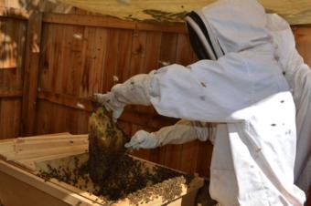 Backyard Beekeeping Basics