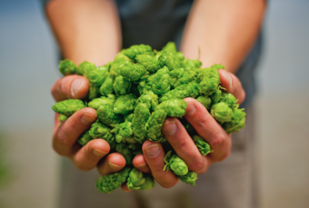 Beside the Bine: The Humanity of Hop Cultivation