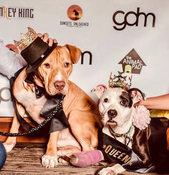 Charity Pooch Prom