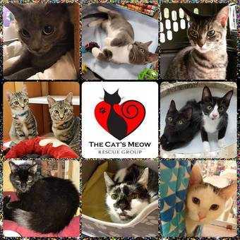 Burlington, NJ:  The Cats Meow Animal Rescue Comedy Fundraiser
