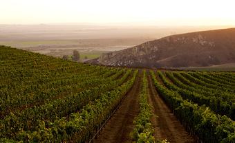 Wine + Beer Winemaker Tasting: Bien Nacido Vineyard & Solomon Hills Estate
